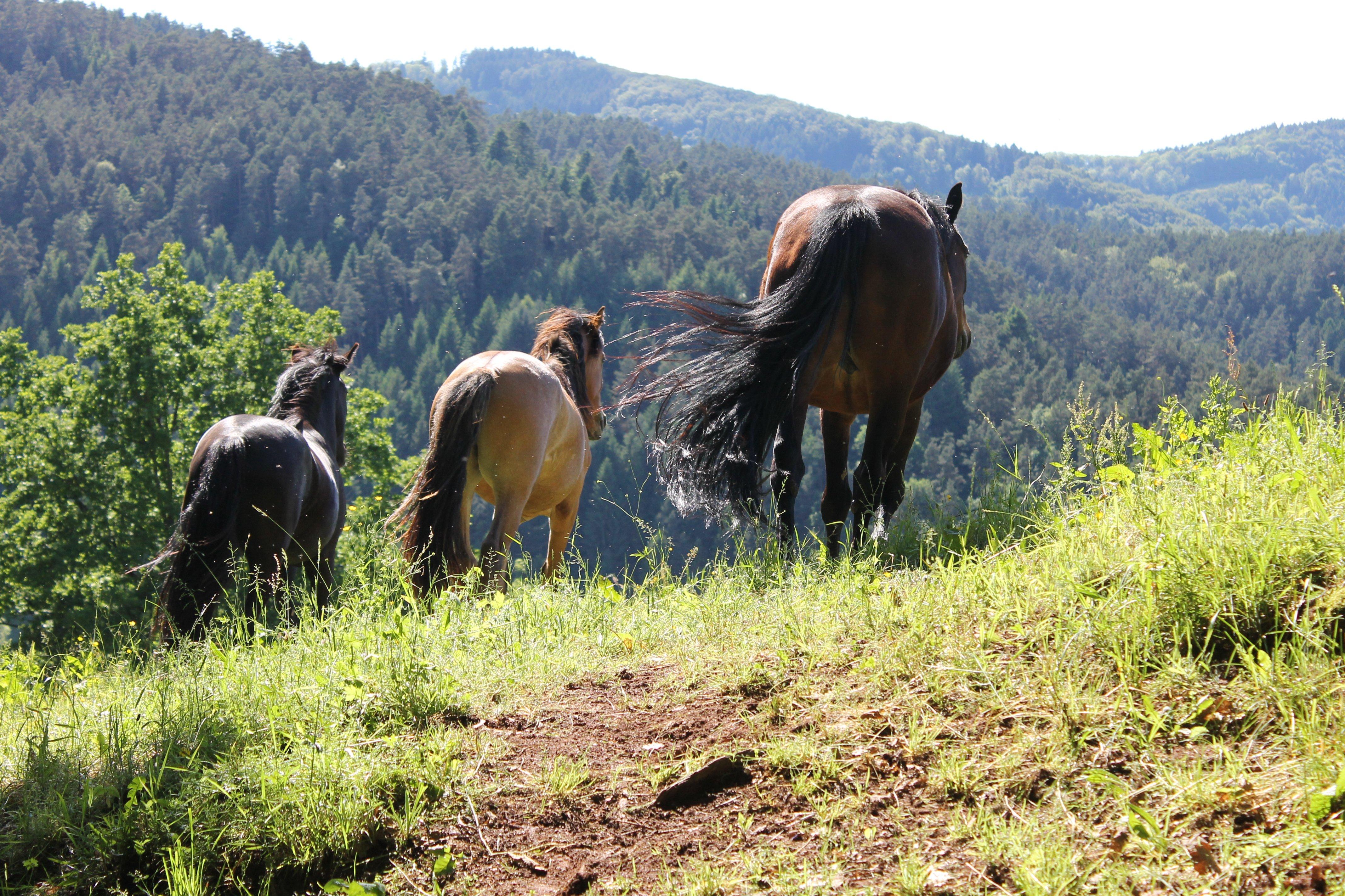 Unsere Pferde Horberlehof